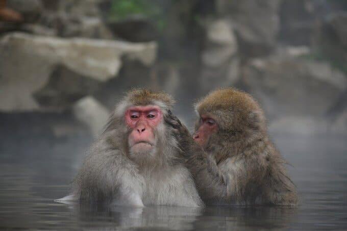 日帰り温泉 彷徨うBonJin